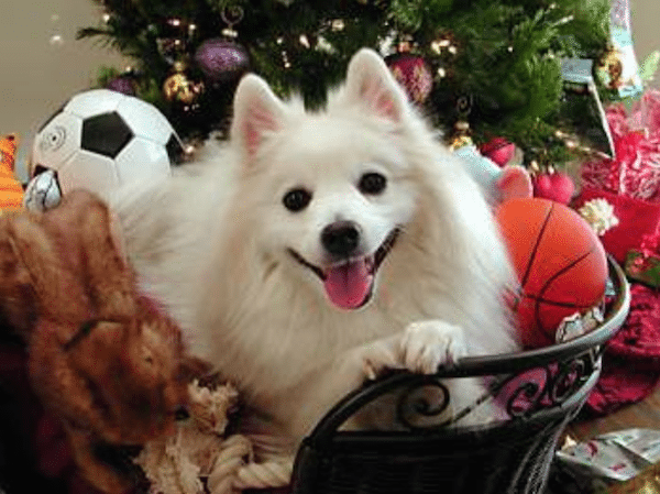 Christmasdogs5