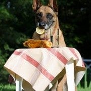 foods toxic for dogs