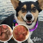 Paw Pimples Before Paw Soother and PawTection
