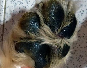 dry paws to moist paws with paw soother