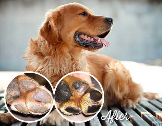 How to Heal Burned Dog Paws