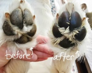 pawtection testimonial before and after healed paw pads
